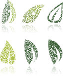 Green ornamental leafs. Collection of green ornamental leafs on white background Royalty Free Stock Photography