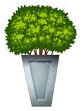 A green ornamental plant Royalty Free Stock Image