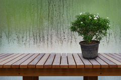 Green ornamental plants, flowering white in old flower pot on wooden table with background is water drops on glass. Royalty Free Stock Image