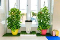 Green ornamental plants Home Interiors Royalty Free Stock Photos