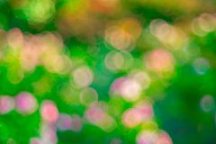 Green ose Bokeh background,Abstract backgrounds. Nobody, blurred. Green rose Bokeh background,Abstract backgrounds. Nobody, blurred. summer Stock Photos