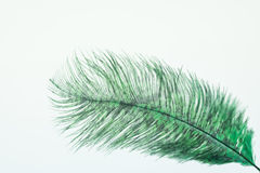 Green ostrich feather Stock Image
