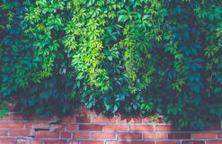 Green Outdoor Plants on Brown Brick Wall Stock Photography