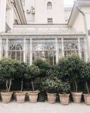 Green Outdoor Plants Near White House Royalty Free Stock Photos