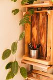 Green Oval Leaf Plant on Cabinet stock photos