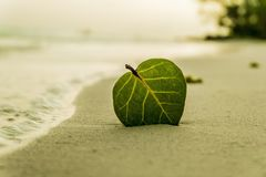 Green Ovate Leaf on Sand Near Shore Stock Photos