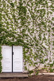Green overgrown house Royalty Free Stock Photos
