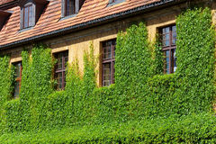 Green overgrown house Stock Photography