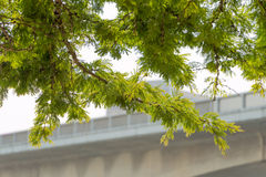 Green Overhang Royalty Free Stock Images