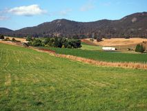 Green Paddocks on Prime Farmland, Tasmania Royalty Free Stock Photos