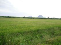 Green paddy field Stock Photo