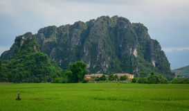 Green paddy field with mountain bacground in Moc Chau. Vietnam. Moc chau is one of destinations in Vietnam Royalty Free Stock Photography
