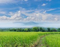 Green paddy rice field with beautiful sky and cloud, Thailand fuji mountain similar to Japan`s Fuji mountain in Thailand. The soft focus green paddy rice field royalty free stock photos