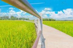 Green paddy rice field with sidewalk bridge, the beautiful sky, and cloud at Ban Chee Tuan, Khuangnai district, Ubon Ratchathani p. Abstract beautiful green royalty free stock photos