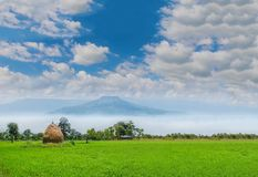 Green paddy rice field with the straw, animal feed, the beautiful sky cloud, and Thailand fuji`s mountain. The soft focus of green paddy rice field with the stock photography