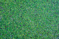 Green pads on lake cool tone Stock Photo