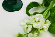 Green paint dripping on white, beautiful white blossom. Color of Spring Summer Royalty Free Stock Image