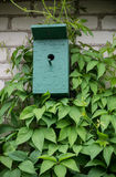 Green painted birdhouse and vines Stock Photos