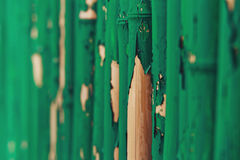 Green Painted old Bamboo Fence, wall background.  Royalty Free Stock Images