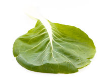 Green pak choi (Brassica rapa) leaf with veins Royalty Free Stock Photos
