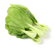 Green pak choi. Close up green pak choi vegetable on white Royalty Free Stock Photo