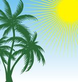 green palm Stock Images