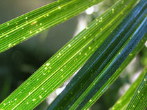 Green palm. Details on green palm Royalty Free Stock Photography