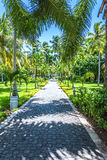 Green palm alley Royalty Free Stock Photography