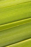 Green Palm Background. Close-up of backlit green palm with diagonal lines running left to right Royalty Free Stock Photo