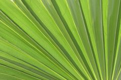 Green Palm Background Royalty Free Stock Image
