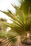 Green palm. On the beach Stock Photography