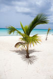 Green palm on the beach close-up Royalty Free Stock Images