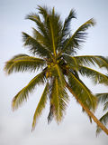 Green palm at the beach Stock Image