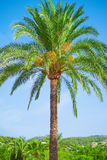 Green palm. Stock Images