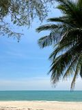Palm branches and branches of a tropical tree against a blue sky, turquoise sea and white sand stock photography