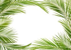 Green palm branches in a frame. Isolated on white background royalty free stock photo