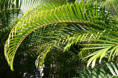 Green Palm Branches in Sunlight stock image