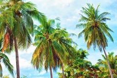 Green Palm Royalty Free Stock Photos