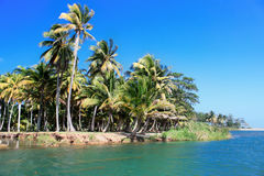 Green palm forest, beautiful  landscape in Baracoa. Cuba Stock Photo