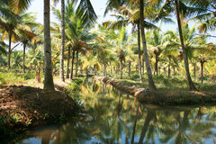 Green palm forest by a  canal Royalty Free Stock Photo