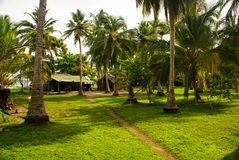 Green Palm Forest in Colombian Island Mucura royalty free stock photo
