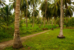 Green Palm Forest in Colombian Island Mucura Stock Photo