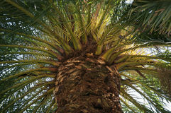 Green palm forest Stock Photography