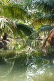 Green palm forest by a small canal Royalty Free Stock Image