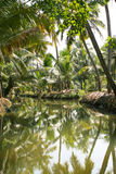 Green palm forest by a small canal Royalty Free Stock Photos
