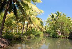 Green palm forest by a small canal, backwaters Stock Photo