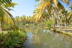 Green palm forest by a small canal, backwaters Stock Photography