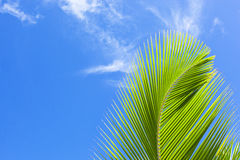 Green palm frond Royalty Free Stock Photos
