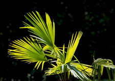 Green palm frond Stock Photos