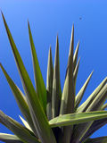 Green palm fronds. Against an azure blue sky Stock Images